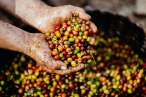 The Fairtrade Foundation wants us all to fight back against climate change.